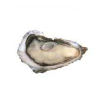 Austrė Spéciales Cadoret Perles Noires, Nr.2