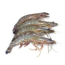 Krevetės, s/g, 16/20, Black Tiger (P.Monodon), 1 kg (gr. k. 800 g) (ŠALDYTA)